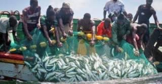Pêche à Kafountine : guerre contre les engins prohibés.
